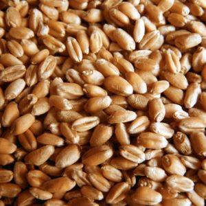 Пшеница 3 кг