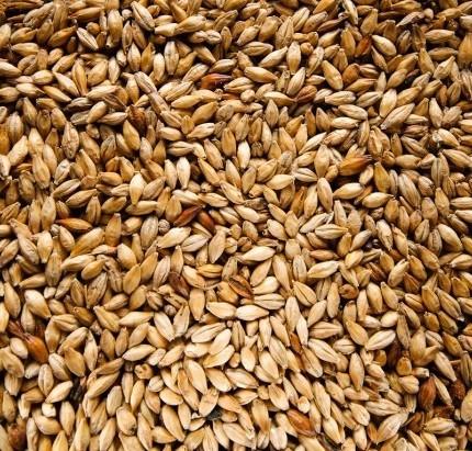 Солод ячменный, зерновой 2.5 кг